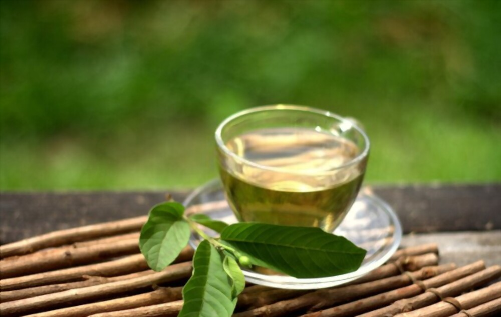 Guava Leaf Tea Fasting What's It Good For Benefits For Your Health And Beauty