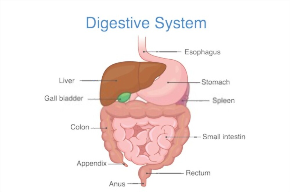 You're Not Digesting Your Food Signs And Symptoms Of Poor Digestion Poor Absorption And Digestion